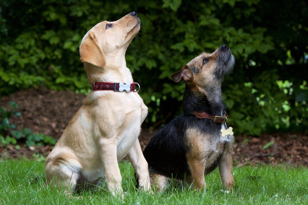 Two dogs in a garden