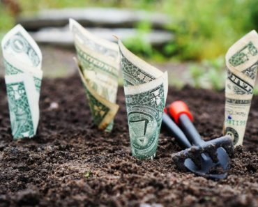 An investment concept: planting dollar bills