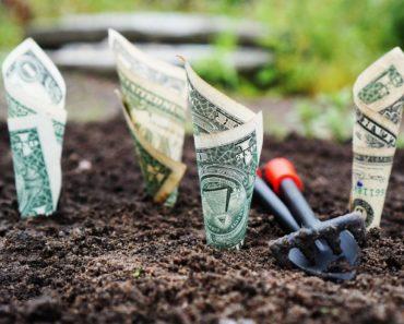 An investment concept: planting dollar bills