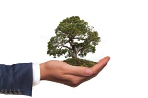 Holding a tree in the hand: an environmental concept
