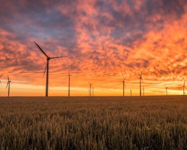 A wind farm at sunset