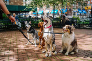 Four dogs on leads in a park