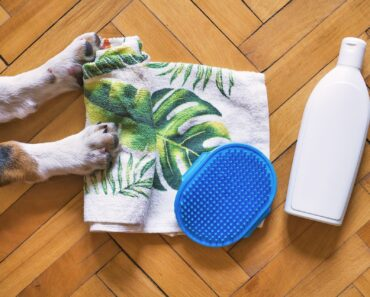 How to Groom Your Dog Effortlessly in 2021-Expert Advice