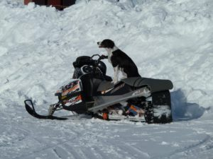 Skidooing, check your winter travel insurance