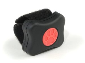 PitPat wearable device for dogs