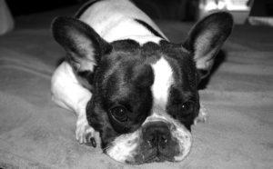Buying dog insurance