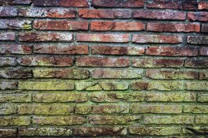 A brick wall with mould