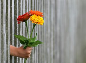 A friendly neighbour passing flowers through a fence